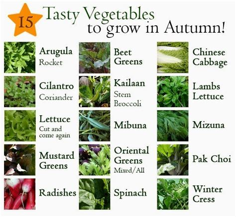 15 Edibles That You Can Grow In Autumn Lovely Greens Winter Vegetable Garden List