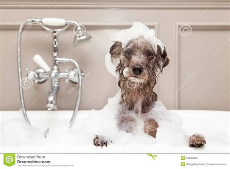 how to make bath time fun for dogs dog training nation funny dog taking bubble bath stock photo image 55660892
