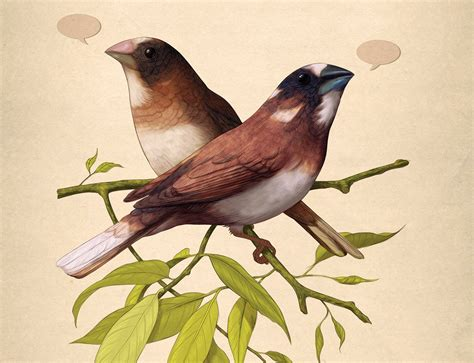 talk is cheep do caged birds sing a key to language
