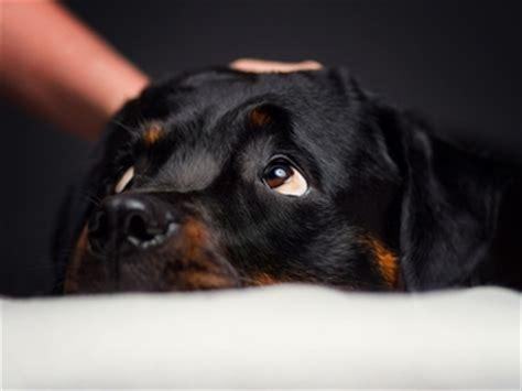 wann hund kastrieren wie oft sollte den hund entwurmen