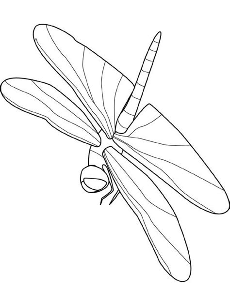 insect coloring pages coloringpages1001 com