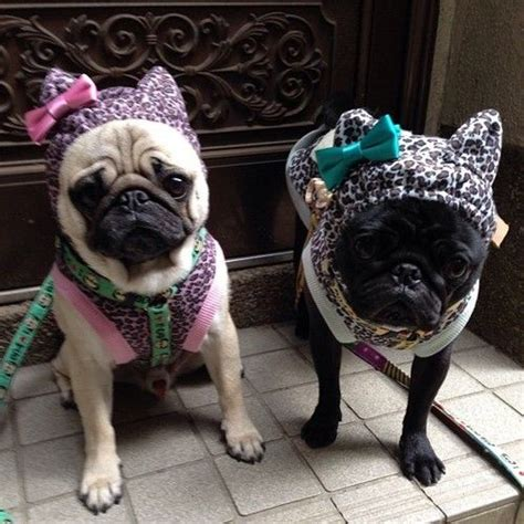 pug clothing for humans 224 best pug clothes and costumes images on pug dogs pug pictures