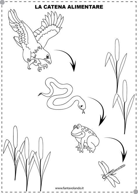 disegno catena alimentare catena alimentare fantavolando