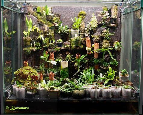 orchidarium plants orchid terrarium unusual plants