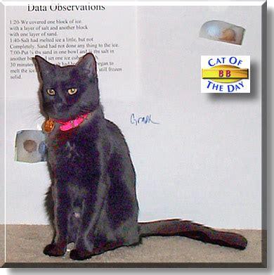bb cat january 23 2004