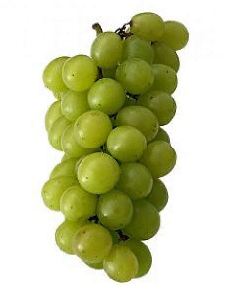 uvas blancas imagenes uvas blancas descargar fotos gratis