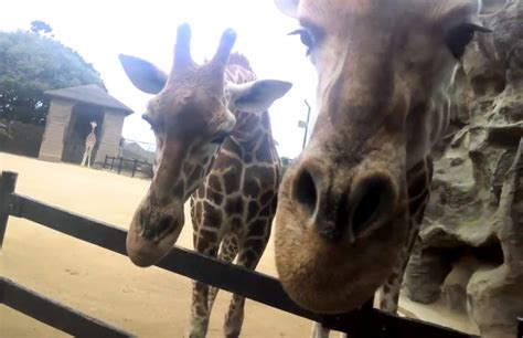 google images zoo animals google glass a day at the zoo video