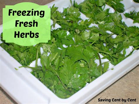 top 28 can you freeze basil making your herb garden grow north scottsdale lifestyle how to