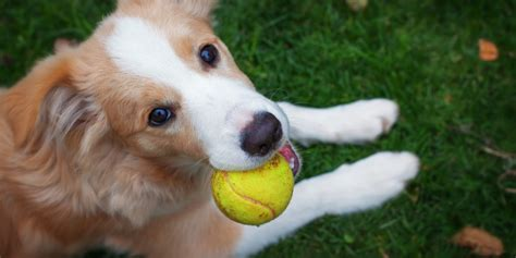 can dogs get mrsa humans and pets may carry similar strains of mrsa huffpost