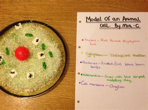 model   specialised cell project animal cell