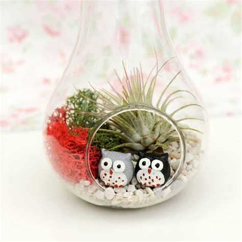 Terrarium Vases by Apple And Pear Glass Vase Air Plant Succulent Terrarium By
