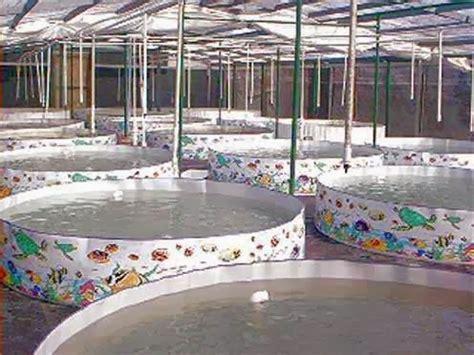 Kolam Terpal Bundar D 25 X1 pembuatan kolam bundar portable p2mkp mina srikandi