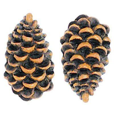 Pine Cone Knobs by Awesome Collection Of Rustic Drawer Pulls Door Knobs For