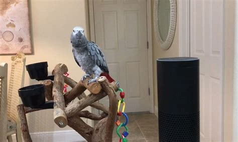 how to get alexa to turn on lights parrot orders amazon alexa to turn on lights daily mail