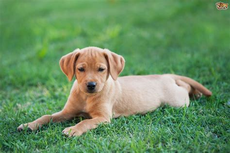 when can puppies get their research shows that dogs do get jealous pets4homes