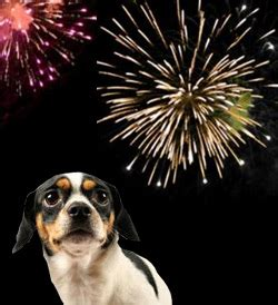 afraid of fireworks sound therapy for firework fear