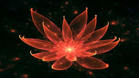 lotus water enlightenment or meditation and universe lotus water enlightenment or meditation and universe
