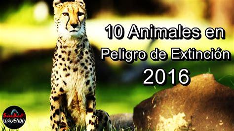 imagenes de animales en peligro de extincin 07 view image 10 animales en peligro de extinci 211 n 2016 youtube