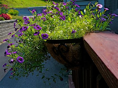 flower bed liner early spring flowers and window planters that you will love