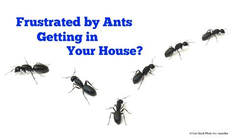 get rid of ants in house how to kill ants in your house 28 images how to get rid of ants easy overnight