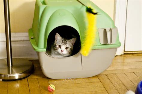 lettiere gatto le migliori lettiere per gatto cose di gatti