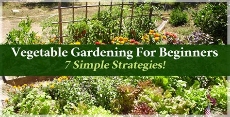 Vegetable Gardening For Beginners 7 Simple Strategies Vegetable Gardens For Beginners