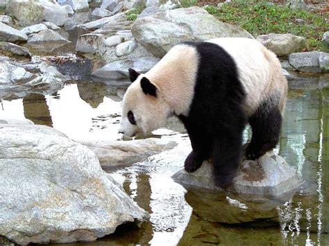 imagenes de animales zoologico animales en zoologicos taringa