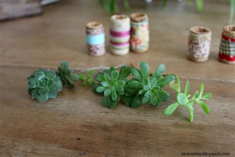 cork succulent planter how to make miniature cork planters for your succulents