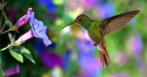 flamingo gardens blog creating a hummingbird habitat in