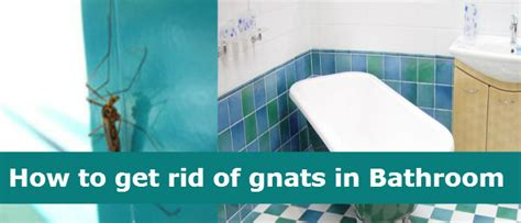 How To Get Rid Of Gnats In Kitchen How To Get Rid Of Gnats In The Kitchen 14 Steps