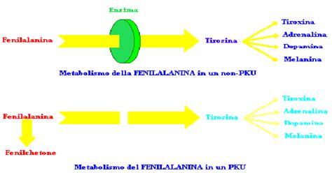 fenilchetonuria alimentazione fenilalanina idrossilasi