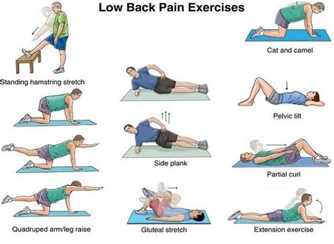 low back strength and flexibility exercises to do at home