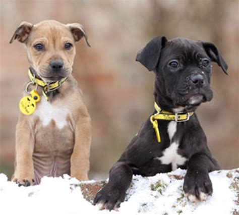 about puppies 10 facts about dogs trust fact file