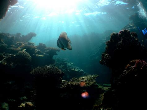 ningaloo reef dive sail ningaloo ningaloo reef dive liveaboard