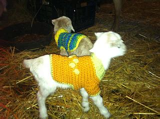 pattern for knitted goat sweater ravelry goat kid sweater pattern by raynie pitts