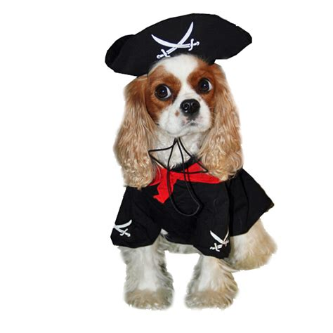 pirate puppy caribbean pirate costume baxterboo