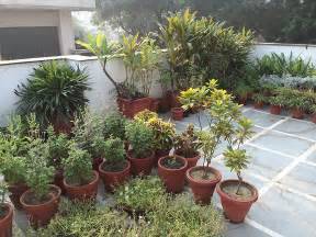dhara the earth an indian gardening blog my roof top