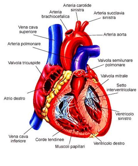malattie cuore e dei vasi l apparato circolatorio