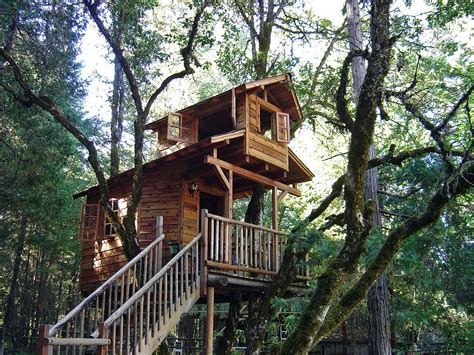 cool tree house for a bear tree houses