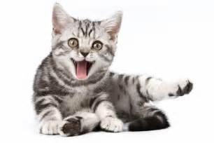 cat friendly veterinary news views