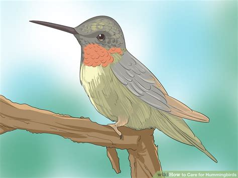 best 28 how to take care of hummingbirds how to care