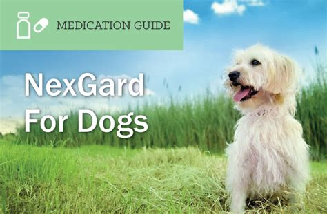 what is nexgard for dogs nexgard for dogs