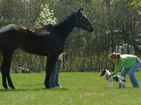 Sho Kuda Ukuran Kecil 10 hal unik terkecil di dunia