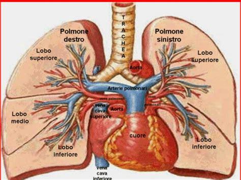 cuore e vasi cos 232 il cuore gennarino borrello