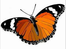 Butterfly Vector Image   Download Free Animals Vector Graphics Free Clipart Downloads Butterflies