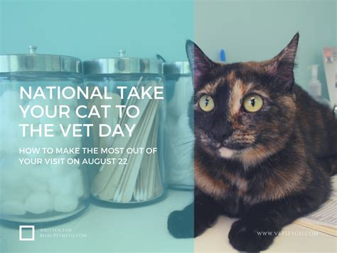 how to get the most out of take your cat to the vet day petmeds 174 pet health blog