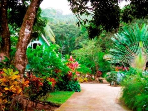 Dominica Cottages by Dominica Forest Cabin Accommodation Helping