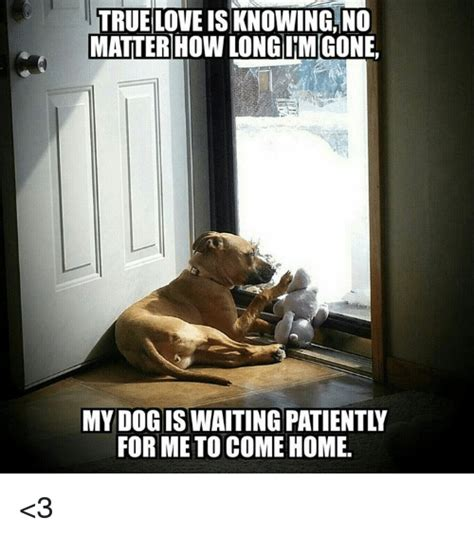 memes  waiting patiently waiting patiently