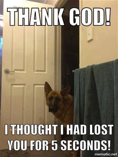 can i go to the bathroom in german 25 great ideas about funny german shepherds on pinterest