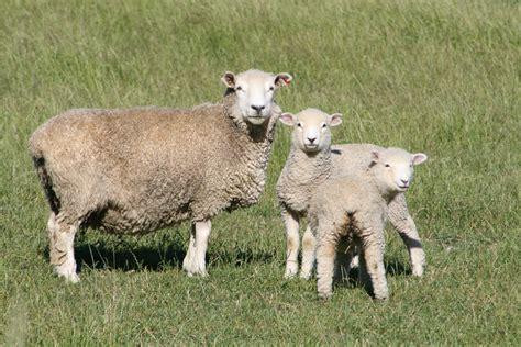 imagenes de animales transgenicos file fauna de nueva zelanda07 jpg wikimedia commons
